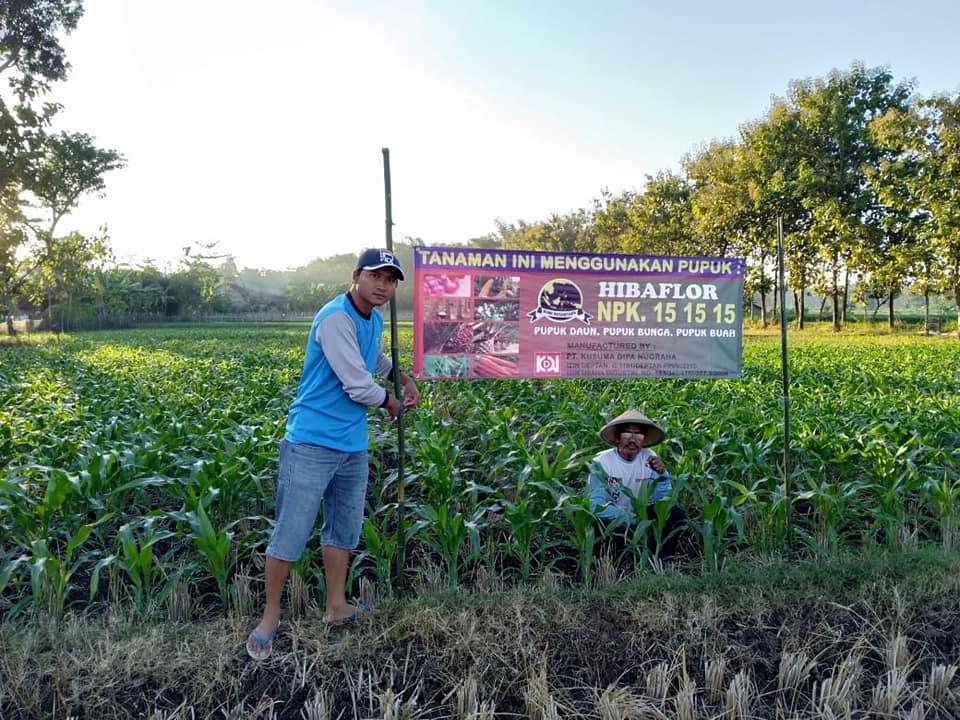 Pertanian jagung dan holtikultura di kota Ponorogo, sukses petani, maju terus pertanian Indonesia