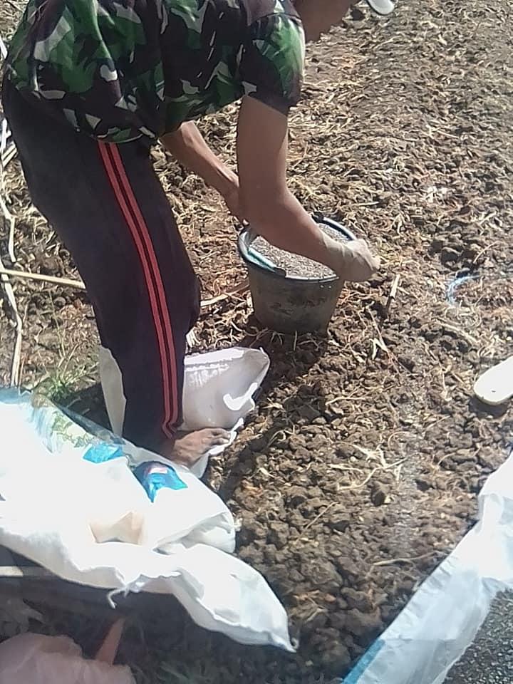 Demplot aplikasi pemupukan petani semangka dan jagung di kota Tulungagung Jawa Timur
