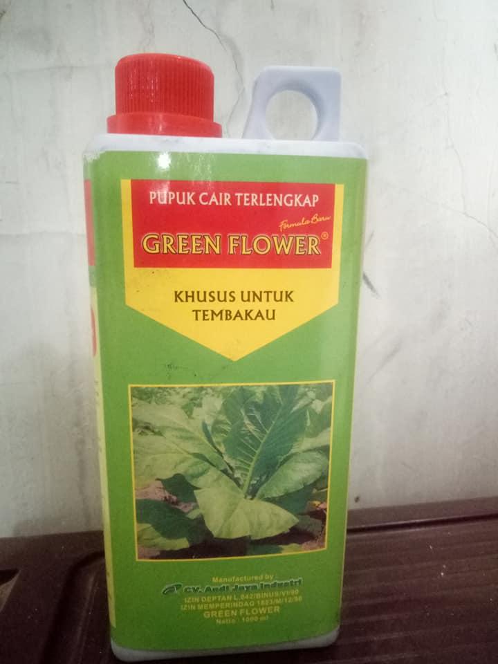 Hasil penyemprotan pupuk pelengkap cair Green Flower pada tanaman tembakau berjalan sukses