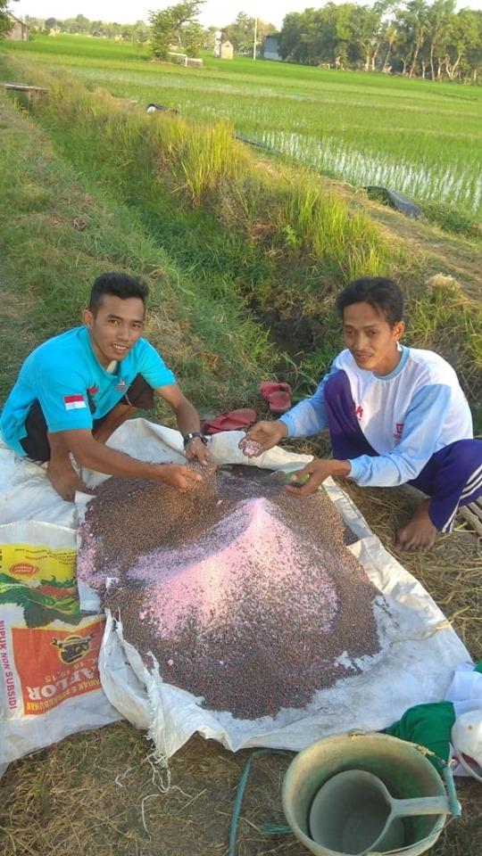Sukses buat petugas lapangan lagi demplot pemupukan pada tanaman padi
