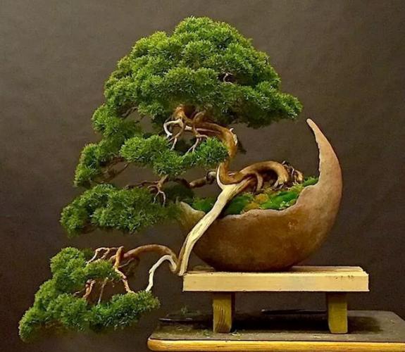 Kết quả hình ảnh cho cây cảnh là gì