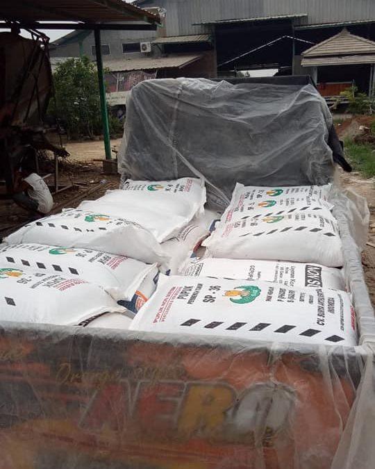 Pengiriman pupuk phospat granul pupuk SP ke kios pertanian Madiun